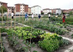 """Italia Nostra: Il progetto """"Orti urbani"""" a Caltanissetta"""
